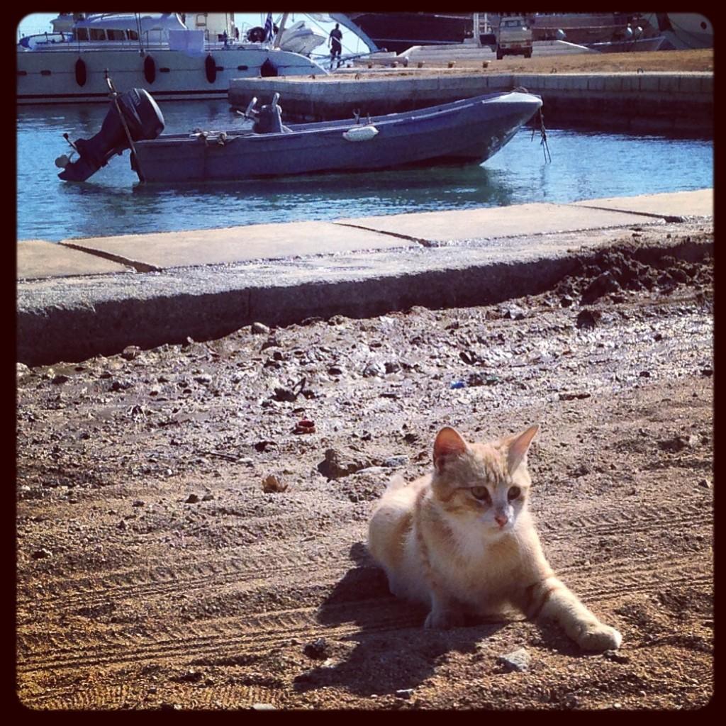 Un chaton sur le port de Mykonos