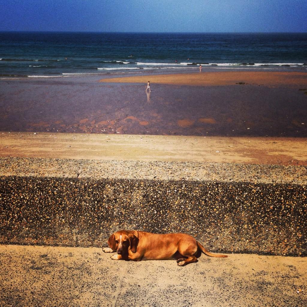 Un chien au pays basque