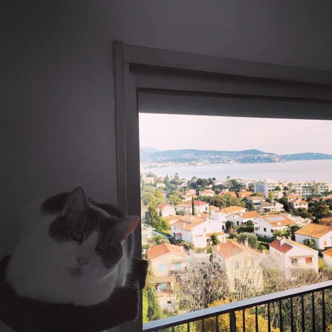 Un chat profitant de la vue sur la baie des Anges