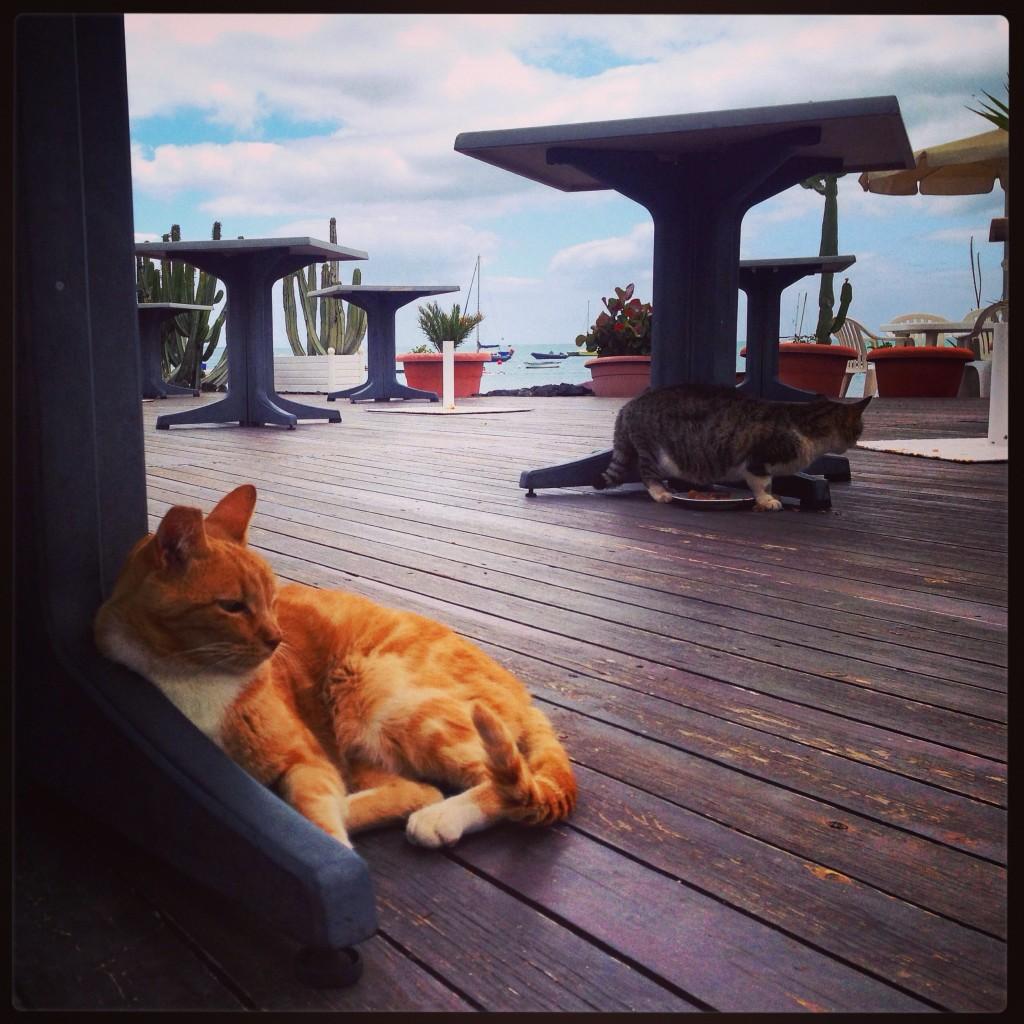 Un chat se repose tranquillement sur une île des Canaries