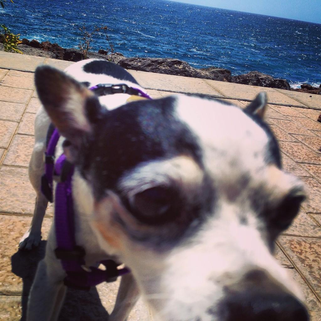 Un chien en bord de mer aux Canaries