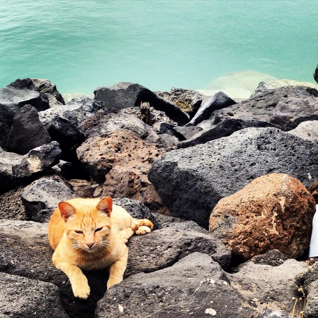 Un chat se repose sur les rochers dans le port de Coralejo
