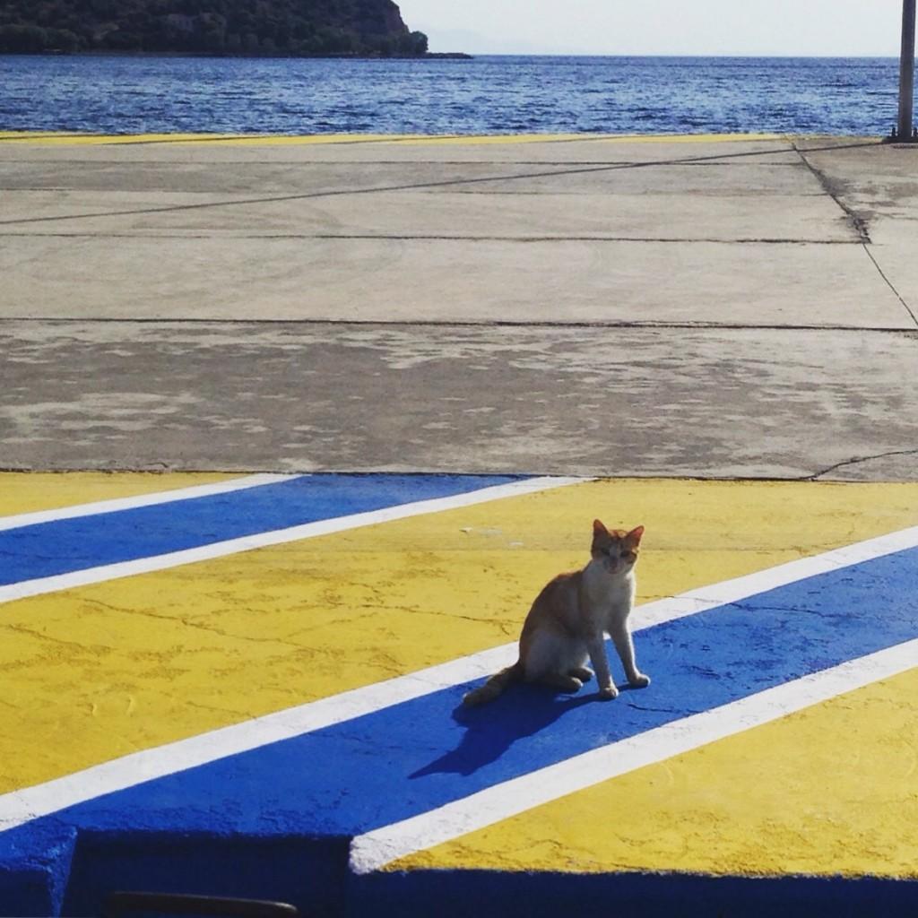 Un chat sur la presqu'île de Methana en Grèce