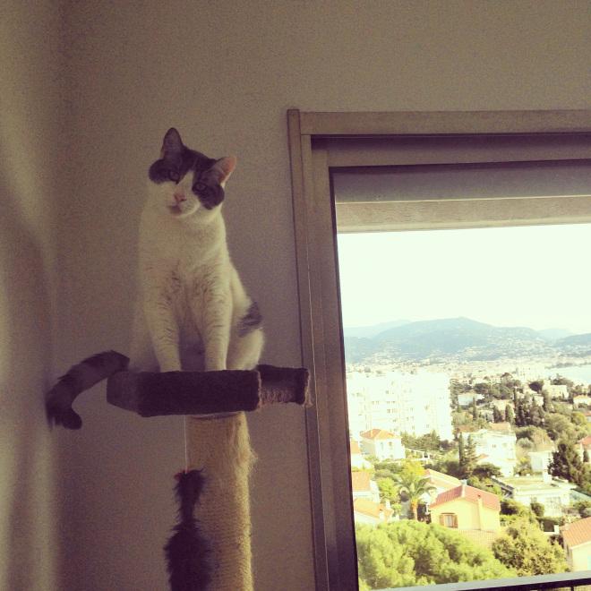 Ce chat à une vue imprenable sur la mer, mais il s'en fout!