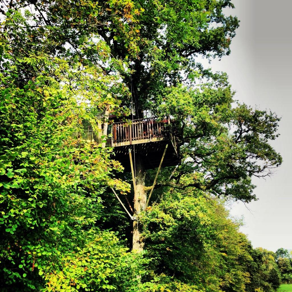 Un logement insolite, une cabane dans un arbre