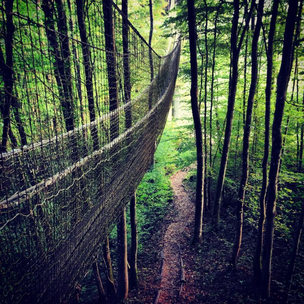 Un pont de singe entre les arbres