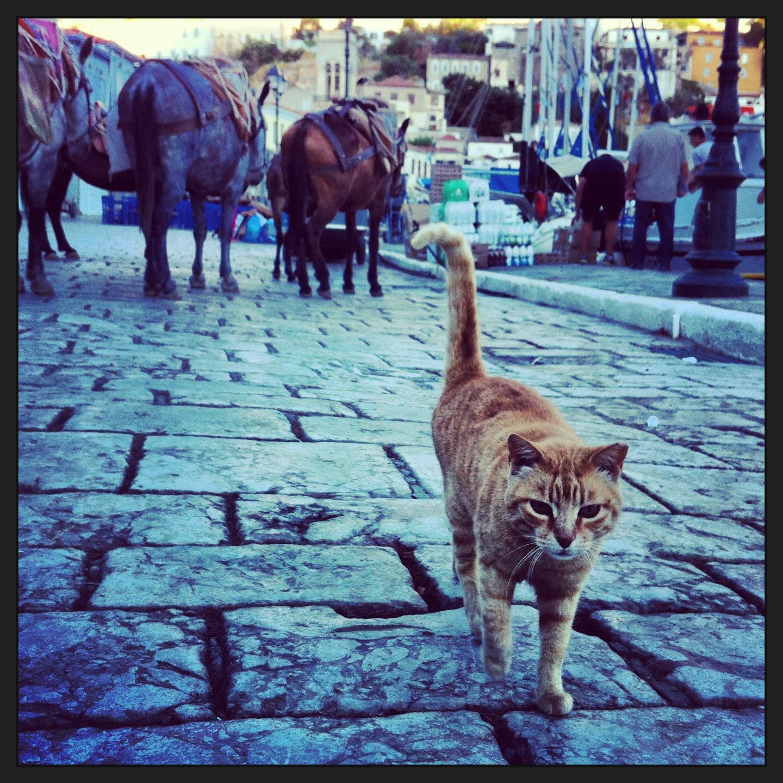 Un Chat qui se balade sur le quai d' un petit port grecque