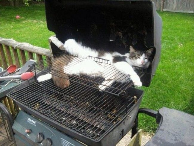 Un chat coincé sur un barbecue