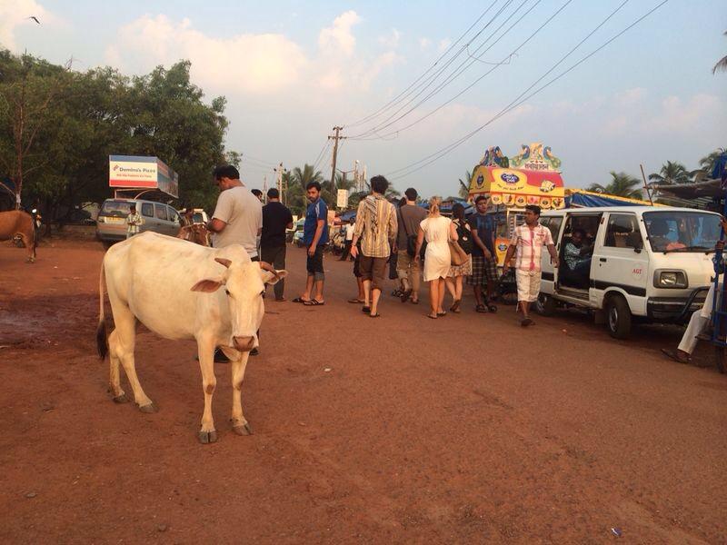 Une vache sacrée en Inde