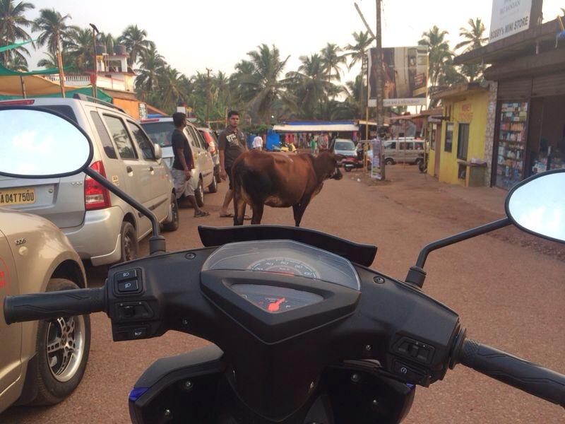 Une vache sur la route un grand classique en Inde