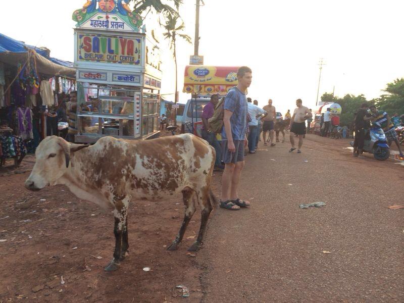 Oh la vache sacrée