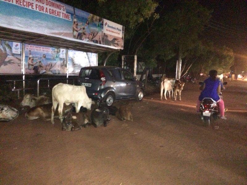 Escale de nuit au pays des vaches sacrées