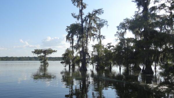 Le Mississipi, l'un des plus grands fleuves du monde et ses méandres en Louisiane