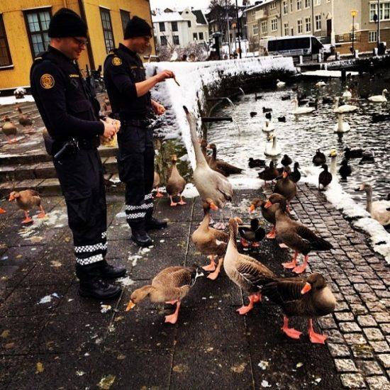 Deux policiers islandais donnent à manger à des oies et des canards
