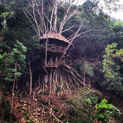 Maison perchée dans les arbres en Thailande