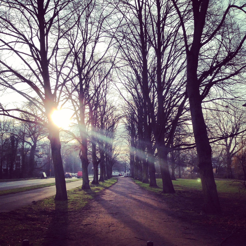 Ballade dans un parc très tôt le matin