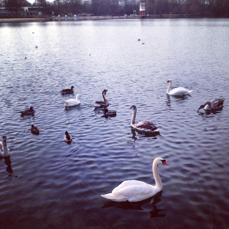 Un grand lac à proximité du centre ville d'Hanovre.