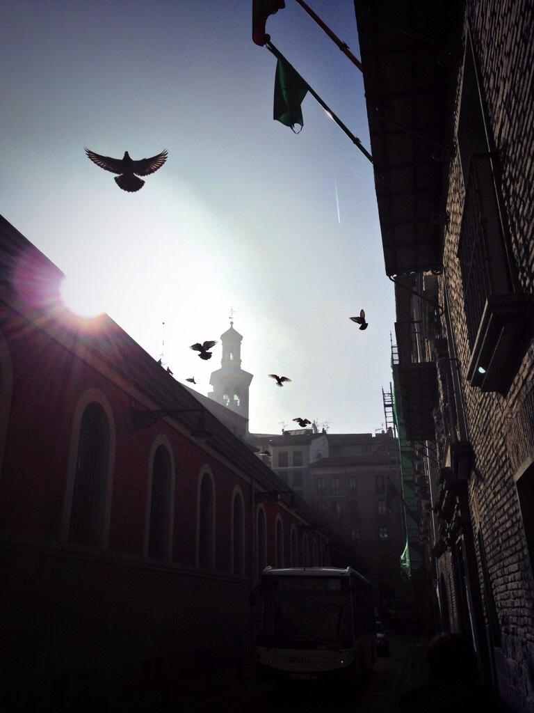 Pampelune, des pigeons et une église