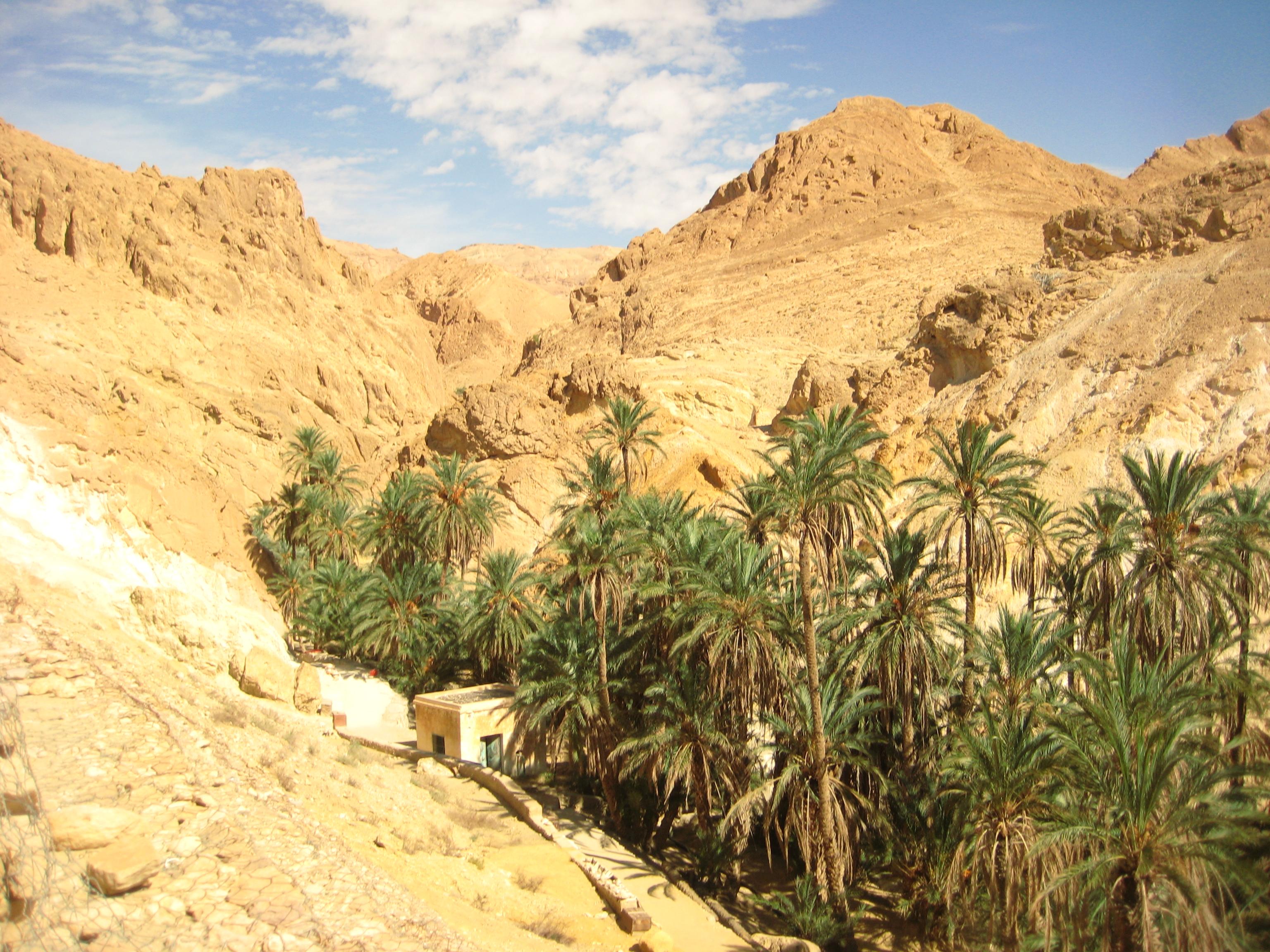 Un oasis niché dans les contreforts du désert près de Tozeur