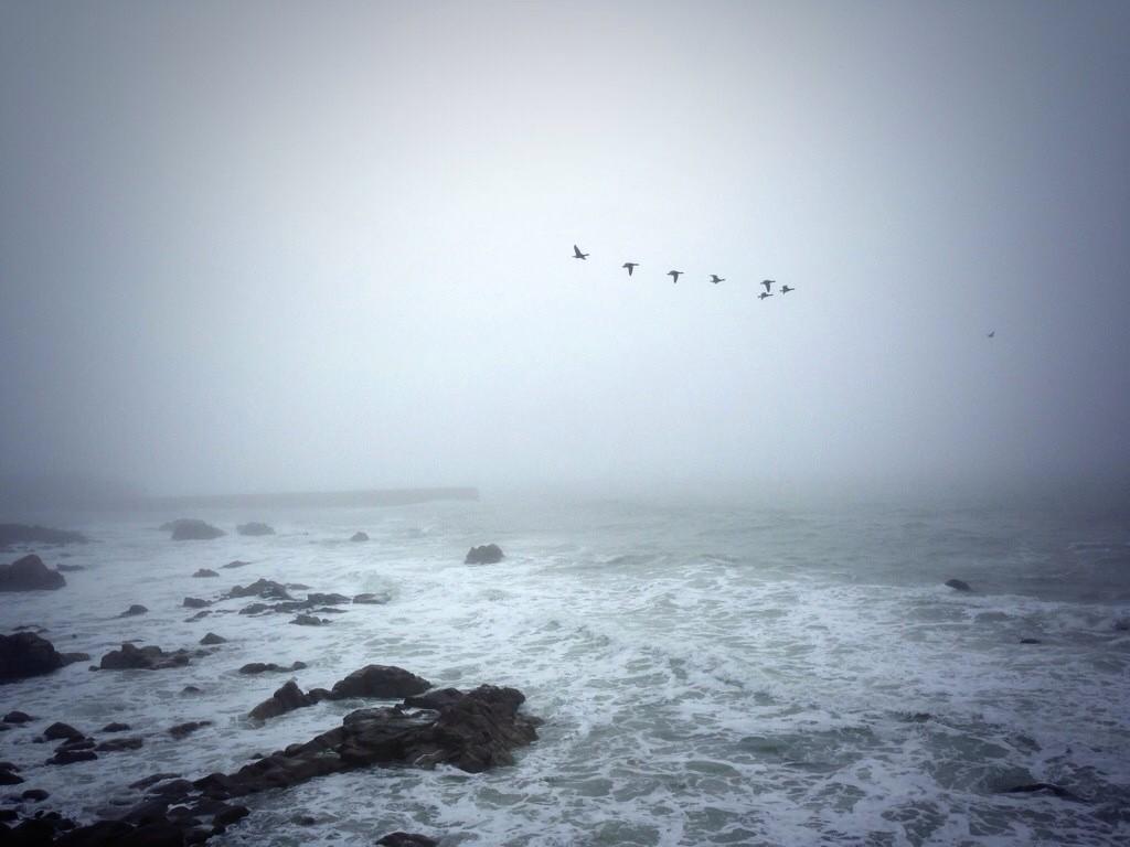 Des cormorans survolent la Bretagne