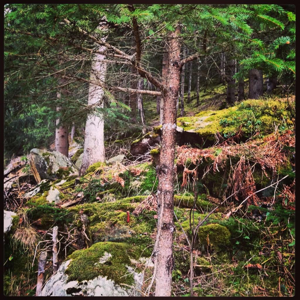Les sous-bois au printemps après l'hiver autrichien
