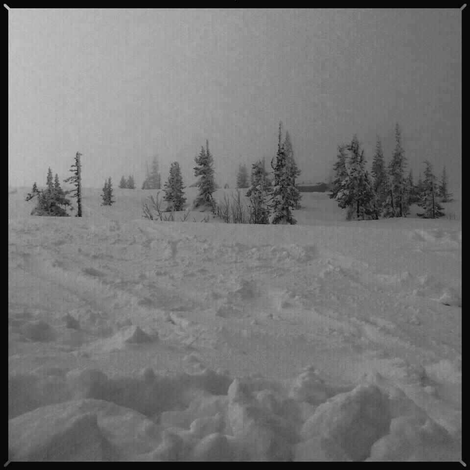 Un champ de neige