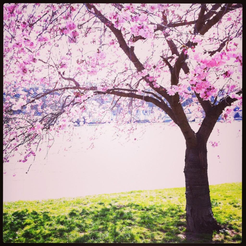 Koblenz en avril