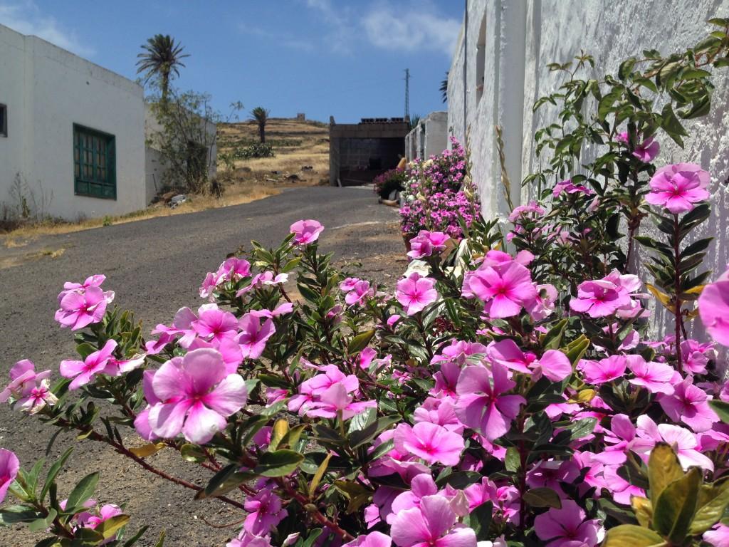 Le printemps dans un petit village des Canaries