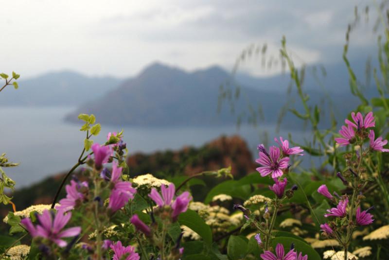Le printemps en Corse