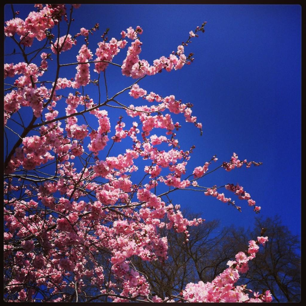 Un printemps allemand, Koblenz