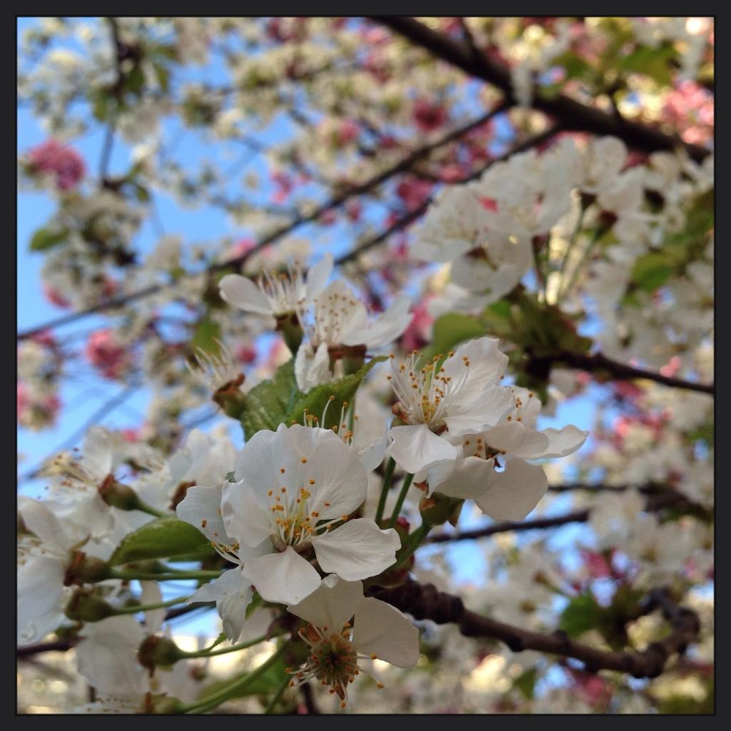 Le printemps en région parisienne