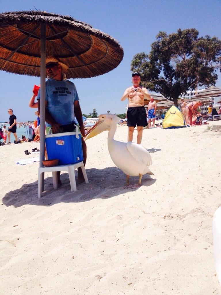 Un pélican se ballade sur une plage en Crête
