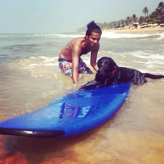 Un chien surfer