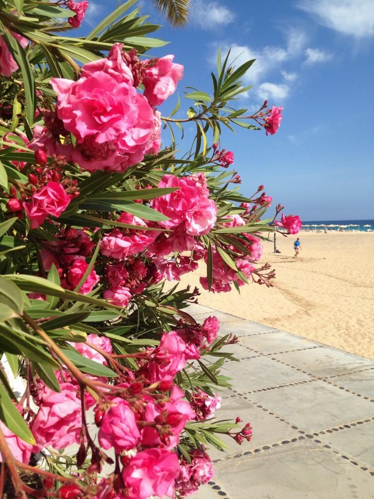 Le printemps en mai sur l'archipel des Canaries