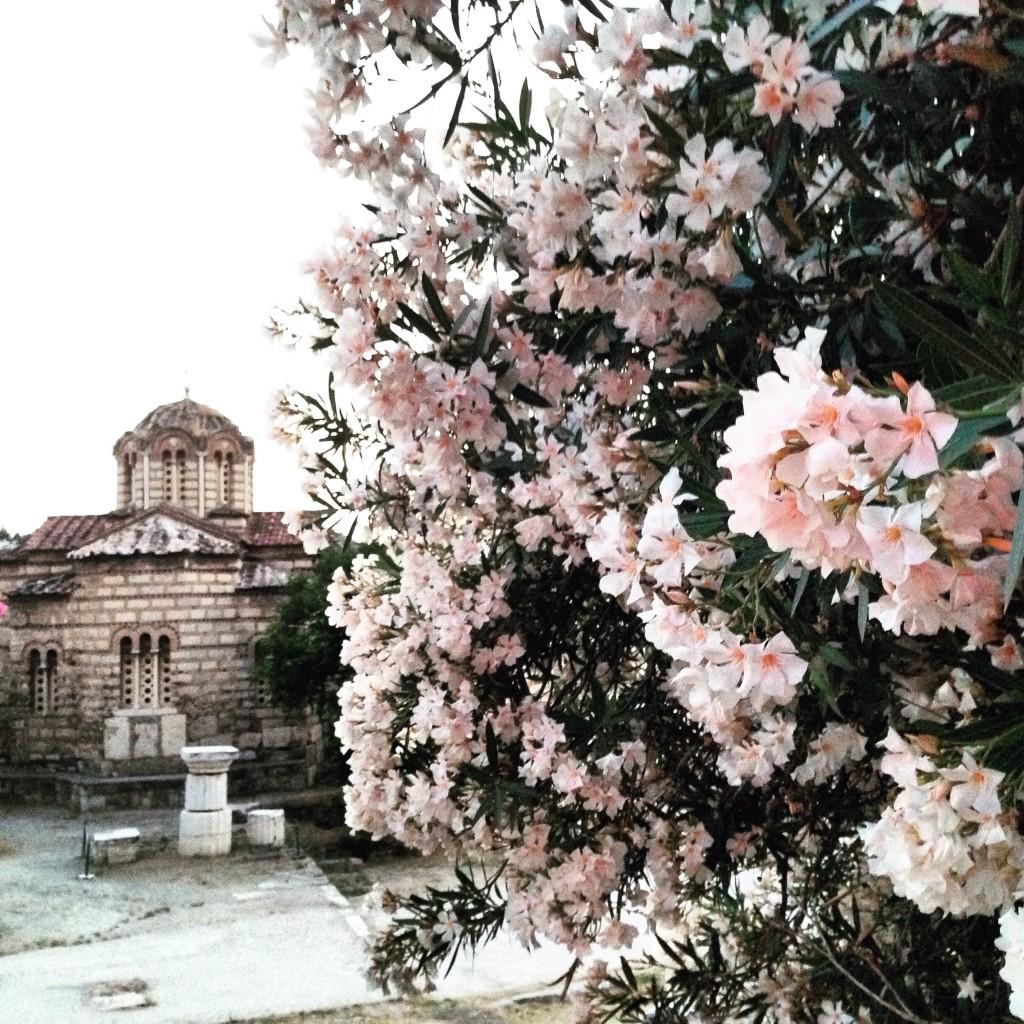 Athènes déborde sous les fleurs