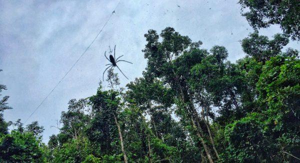 Une araignée dans la jungle dans le nord de la Thaïlande