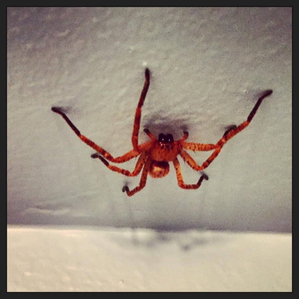 Les araignées les plus dangereuses