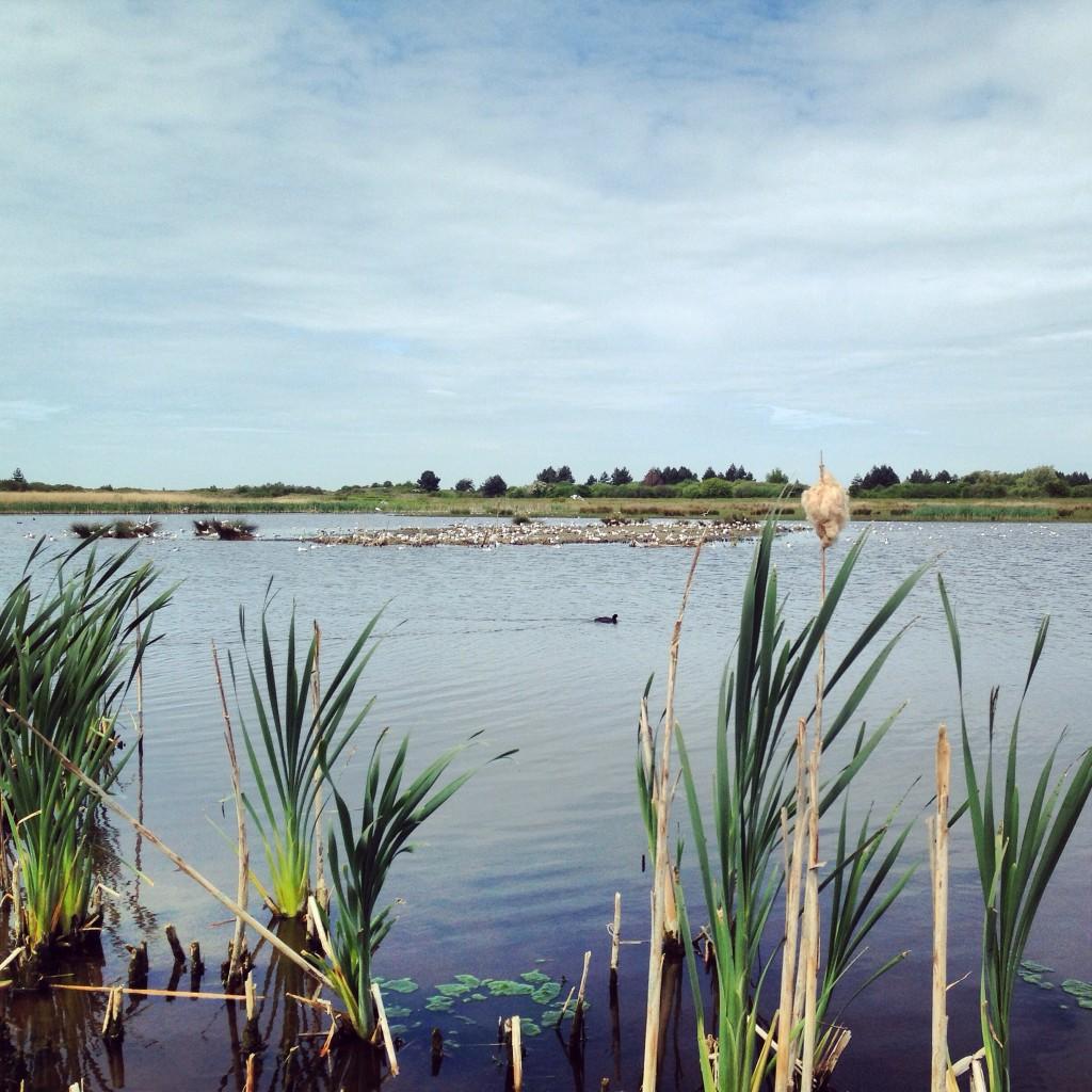 Un plan d'eau en baie de Somme