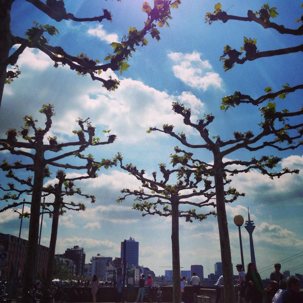 Les premières feuilles annoncent le retour du printemps