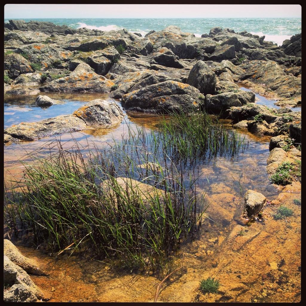 Des marais en formation au bord de l'Océan