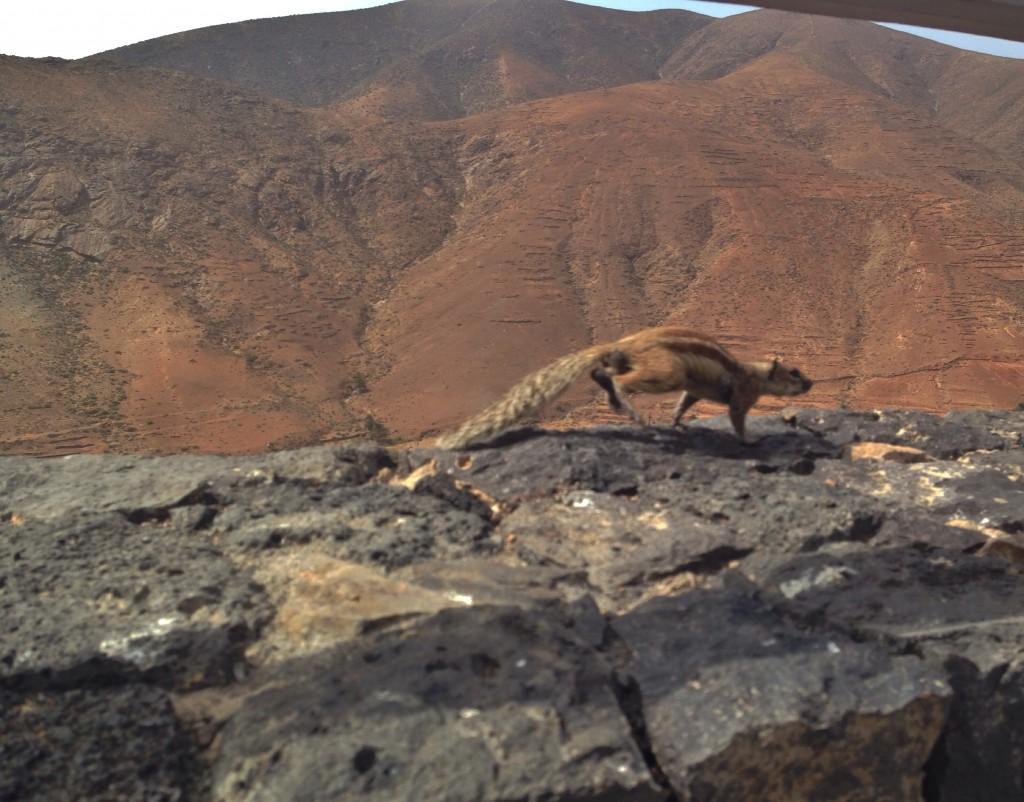 Un écureuil prend la fuite