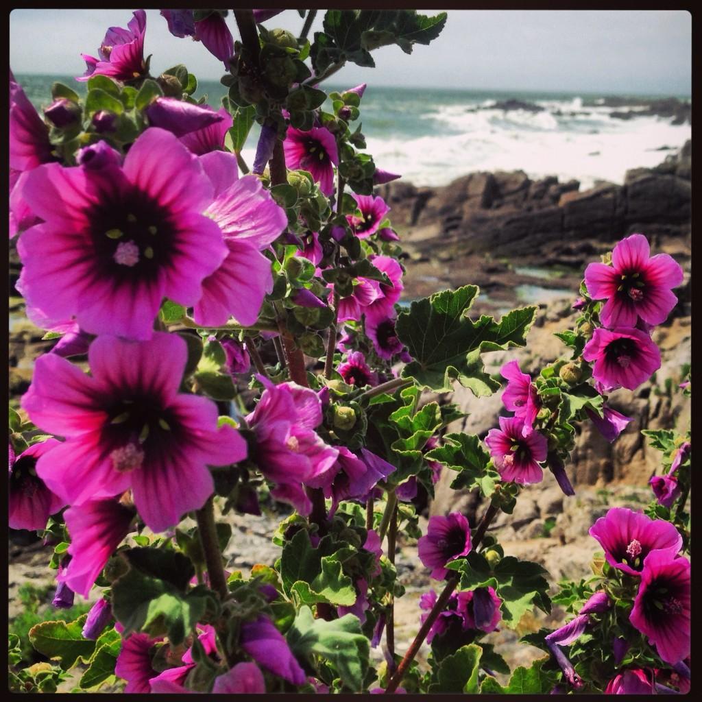 La Bretagne en fleur