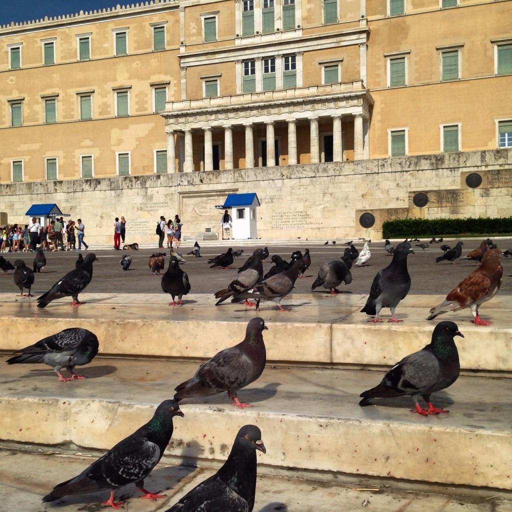 58. Des pigeons se réunissent place de la Constitution à Athènes