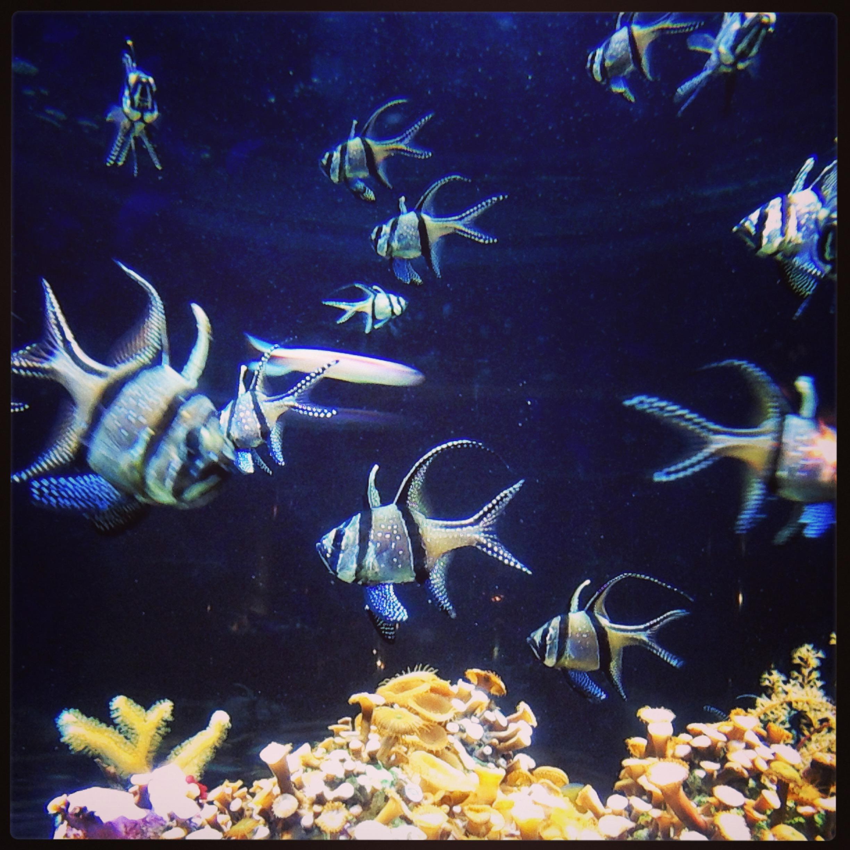 Plongeon dans les aquariums de la cit de la mer escale for Aquarium de mer