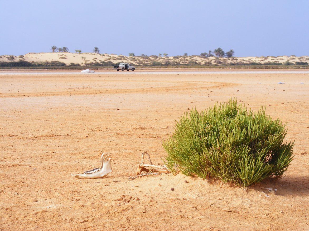 Quelque part dans le nord Libyen
