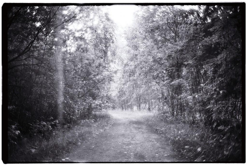 Dans les sous-bois finlandais l'été