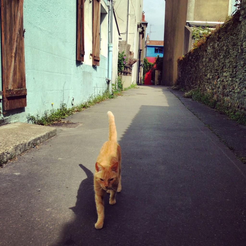 Un chat se balade entre l'ombre et la lumière