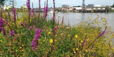 Vue sur la Loire depuis Trentemoult