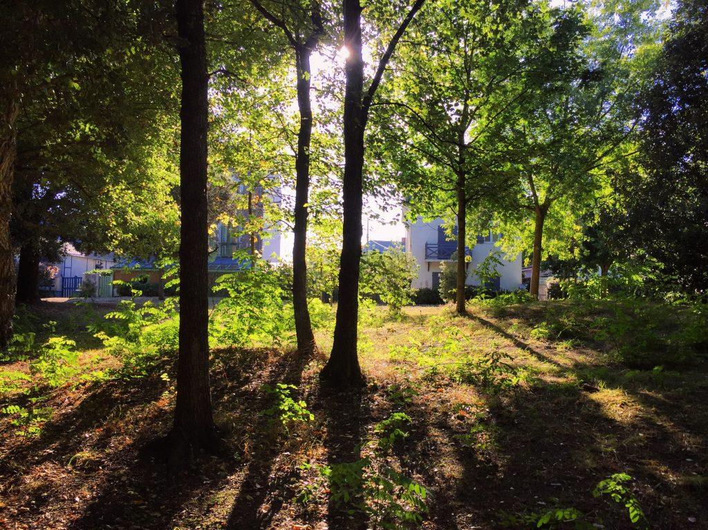 Le bois du Pouliguen en fin de journée