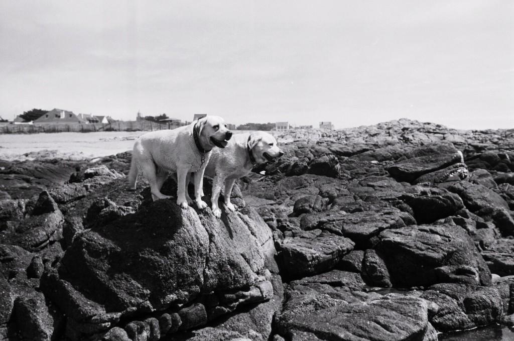 2 labradors refusent de s'aventurer plus loin dans les rochers